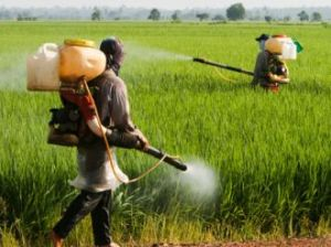 Paraquat insecticide poisoning